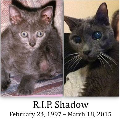 As a kitten, then as an adult, with R.I.P. Shadow