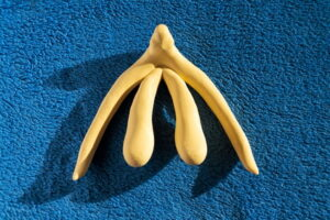3d printed female sex organ clitoris for human anatomy lessons